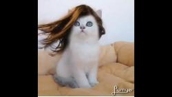 تفسير حلم قطة برأسين تتكلم معي في المنام