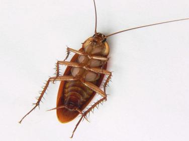 تفسير حلم الصراصير تمشي على الجسم في المنام