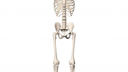 تفسير حلم عظام الميت في المنام