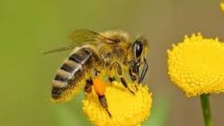 تفسير حلم النحل يطاردني في المنام