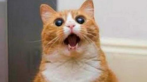 تفسير حلم قطة برأسين تلاحقني في المنام