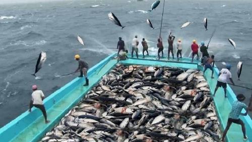 تفسير حلم صيد السمك الملون في المنام