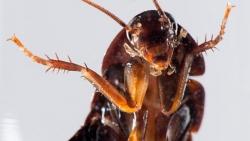 تفسير حلم الصراصير تخرج من البالوعة في المنام