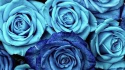 تفسير حلم الورد للمتزوجه في المنام