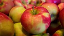 تفسير حلم رؤية التفاح في المنام