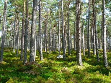 تفسير حلم رؤية الغابات في المنام لابن سيرين