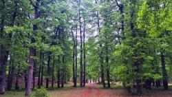 تفسير حلم الضياع في الغابة في المنام