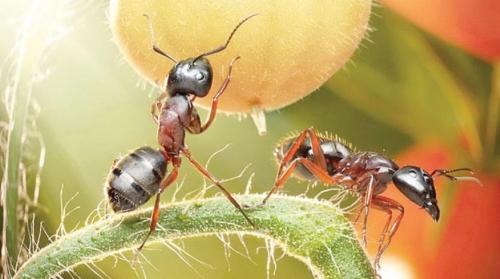 تفسير حلم أكل النمل في المنام