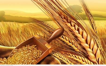 تفسير حلم القمح والشعير