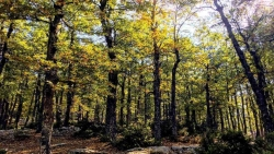 تفسير حلم الغابة الخضراء في المنام