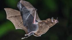 تفسير رؤية الخفاش في المنام