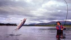 تفسير رؤية الصيد في المنام