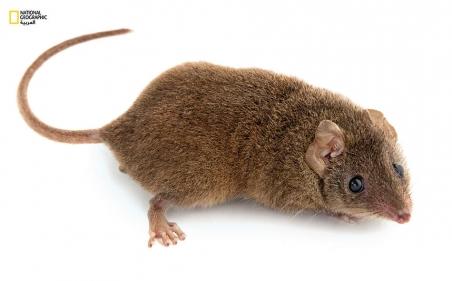 تفسير رؤية الفئران في المنام وقتلها