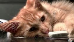 صوت القطط في المنام للعزباء