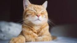 اسماء قطط اناث ومعانيها