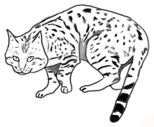 القط البري من اكبر القطط حجما