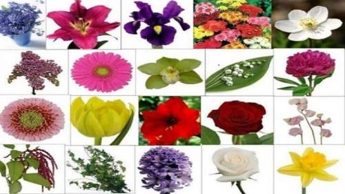 اسماء انواع الورد بالصور