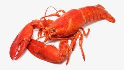تفسير حلم المأكولات البحرية في المنام