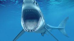 تفسير حلم خروج سمكة القرش من الدبر في المنام