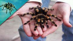 تفسير حلم رؤية العنكبوت